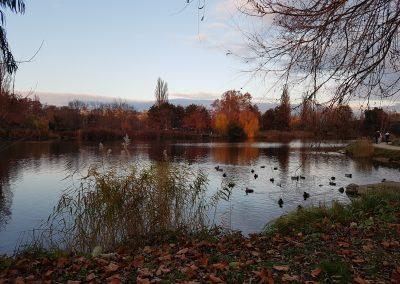 Alte Donau 2